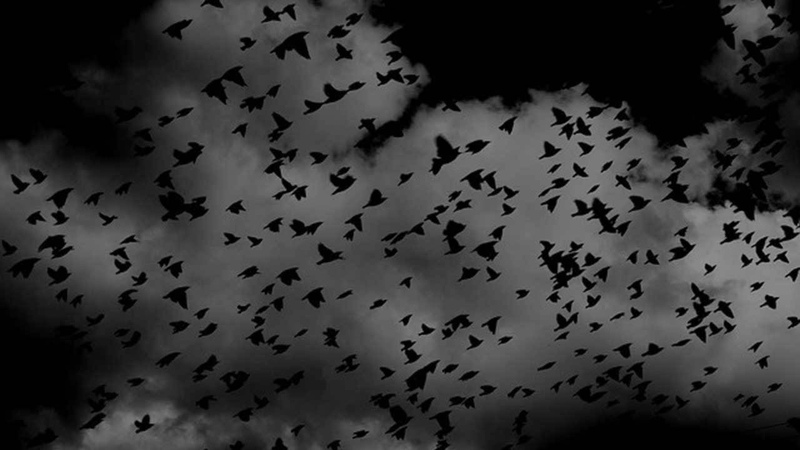 BBC Radio Drama - The Birds by Daphne Du Maurier