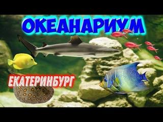 В Океанариуме г.Екатеринбург.🐠Аквариумы,🐋террариум,развлечения.Киты,акулы,скаты,пираньи,🐡мурены.