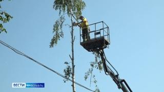 В Ярославле на улице Рыбинской массово уничтожают деревья из-за стройки жилкомплекса