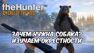 🔴 Stream'чанскАй ▼ Зачем нужна собака? Изучаем окрестности ● theHunter: Call of the Wild # 2