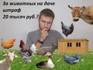 Можно ли держать на садовом участке сельскохозяйственных животных?   Животные на даче