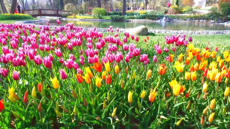 Неземная Красота Фестиваль Тюльпанов в Стамбуле 2019