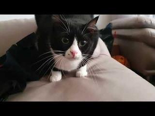 OVEREXCITED very funny cat - Очень смешная кошка Чёртик сама себя развлекает в серые будни