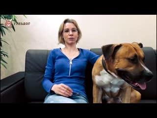 Почему ваша собака упирается головой в стену