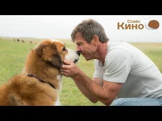Собачья жизнь (2017, США) фэнтези, драма, приключения, комедия, семейный; dub; смотреть фильм/кино/трейлер онлайн КиноСпайс HD