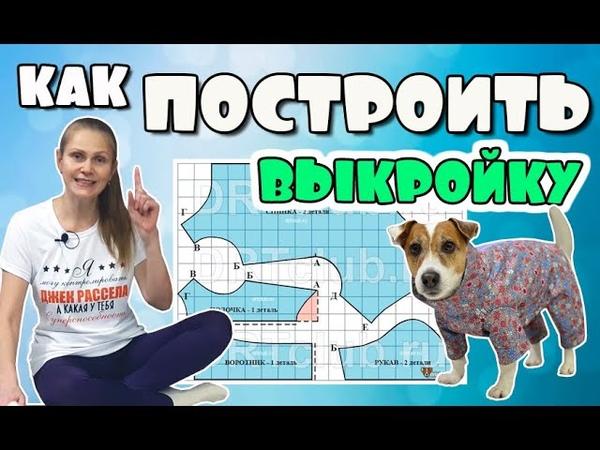 Как построить выкройку комбинезона или жилета для собаки