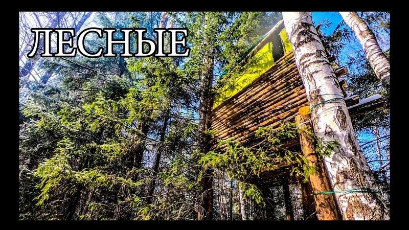 ДОМ НА ДЕРЕВЕ УЛУЧШЕНИЯ И ОБУСТРОЙСТВО BUSHCRAFT HOUSE on the TREE UPGRADE DIY
