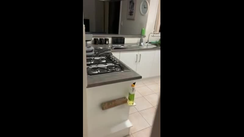 Как сделать, чтобы кот больше не залезал на стол
