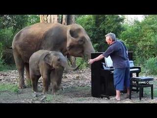 "Piano ""Méditation de Thaïs"" for Mother and Baby Elephant"