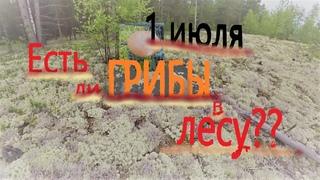 Грибы. Есть ли грибы в лесах южной части Архангельской области на 1 июля??