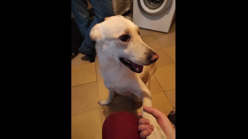 Привет из города Чехов Собака по кличке Бади