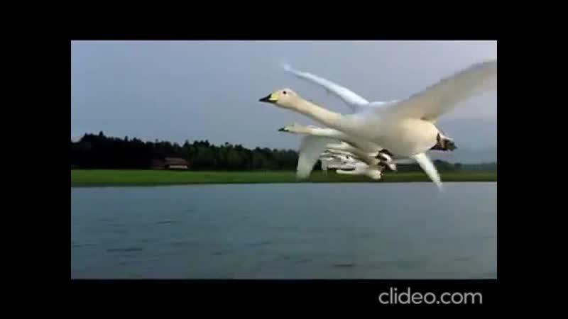 Перелетные птицы. Музыка завораживает. Рома Жуков
