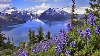 Природа Азербайджана - Конёк горный. Альпийские луга.Шахдаг
