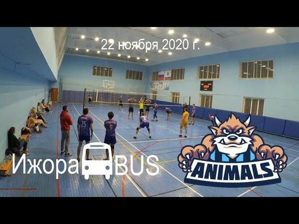 Ижора BUS Animals 0 3 22 11 2020 КВЛ Медиум Юг