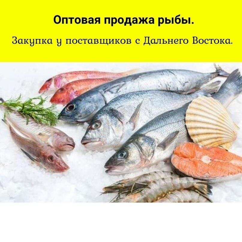 Лиды по 285 рублей на покупку рыбу оптом, изображение №16