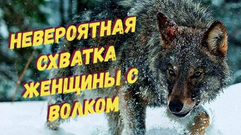 Волк в лесу напал на женщину, то что было дальше невероятно!