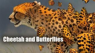 Speed Paint - Cheetah and Leopard Butterflies