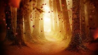 Dark Autumn Music – Fall Shiver Woods   Beautiful, Spooky, Haunted