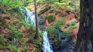 Calming Beautiful Forest Waterfall. Soothing nature Sounds. (10 hours) White Noise for sleep