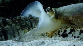 Это настоящий подводный танк! САМАЯ ОПАСНАЯ улитка и ее друзья!