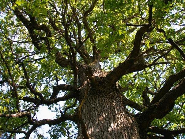 деревья новгородской области фото с названиями больше ваша коробка