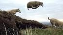 SheepCounter Forhill - Wander Through Me · coub, коуб