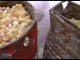 В Курской области уничтожают миллионы цыплят