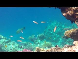 Подвоная жизнь пляжа отеля 29 05 2012