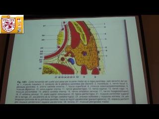 Anatomía - Faringe y Esofago
