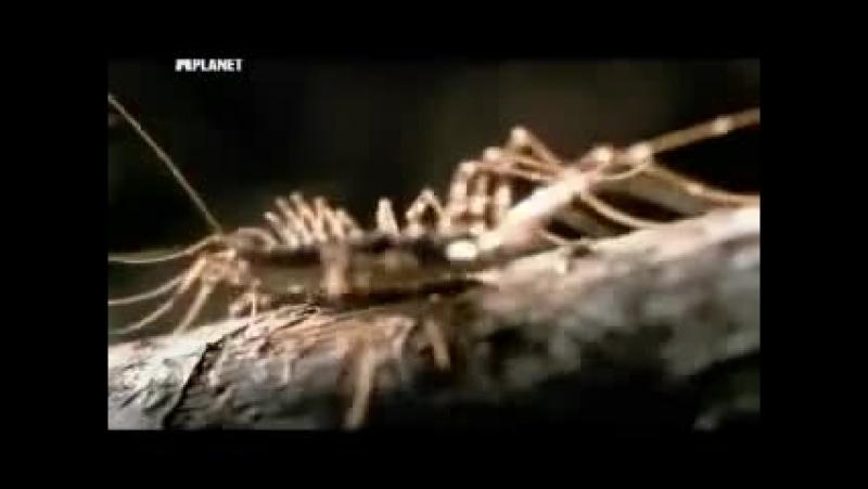 Войны жуков гигантов