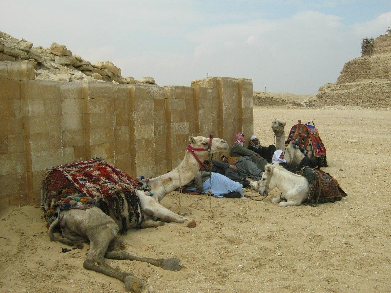 Отдых в тени в комплексе Саккары