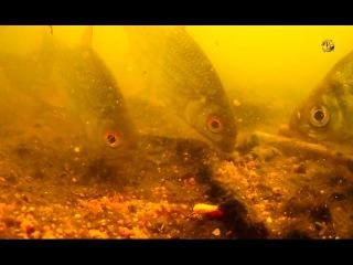 НЕ клевало ! Я думал, что рыбы нет :))) Подводная съемка