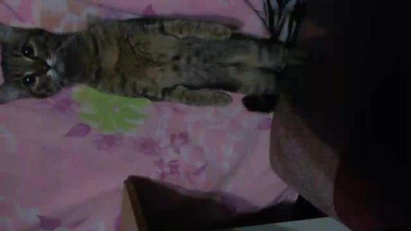 просто кошка видит собаку😂😂