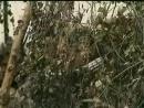 Государственная граница Беларусьфильм 1980 1988 Фильм 2 й Мирное лето 21 го года … 1980 2 я серия развязка