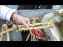 Кости верхних конечностей. Анатомия. Урок 1