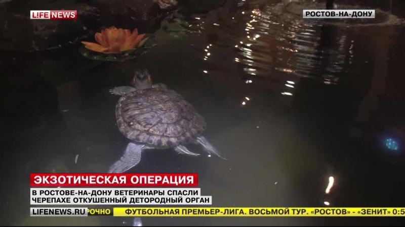 Необычная операция черапахе