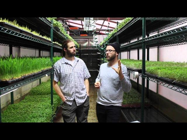 SMALL PROFITABLE MICROGREEN FARM IN A SHIPPING CONTAINER urban farming
