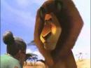 я тебя знаю!это плохая киса Мадагаскар 2