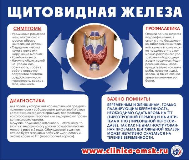 Щитовидка влияет на похудение