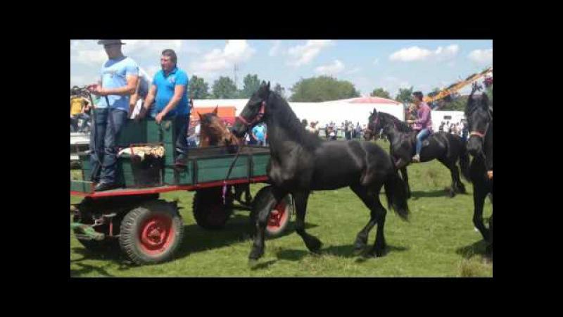 Expozitie de cai Marginea 2016 partea a III a