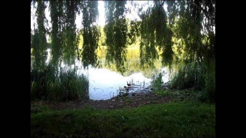 Кёниг 49 Балтрайон Калининграда озеро Летнее Внуки вкусный батон птицы батут