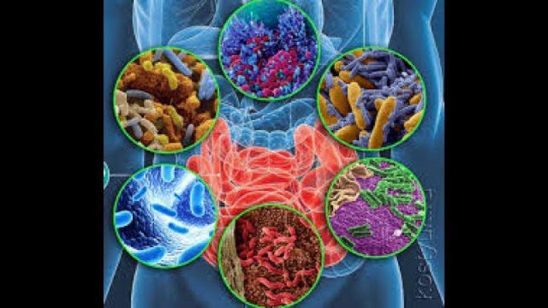 Тонкости голодания Часть III Микробиом человека