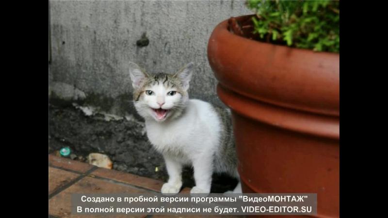 Коти які люблять вмиватися
