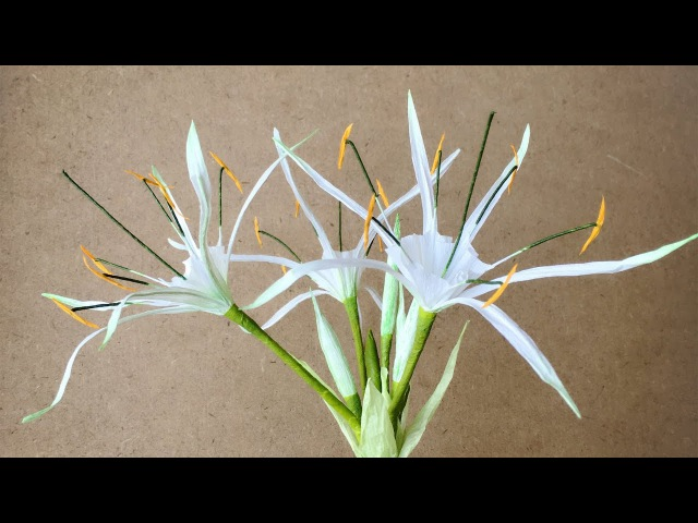 ABC TV How To Make Hymenocallis Speciosa Paper Flower From Crepe Paper Craft Tutorial