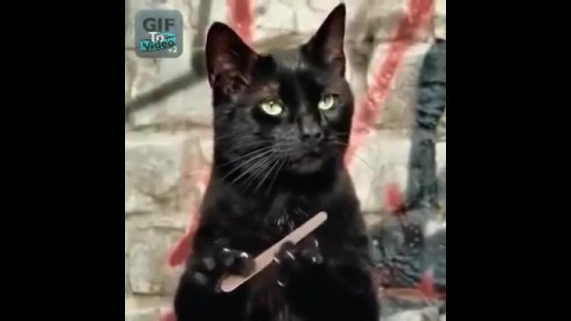 при шлифовке гифка черная кошка пилит ногти первый день