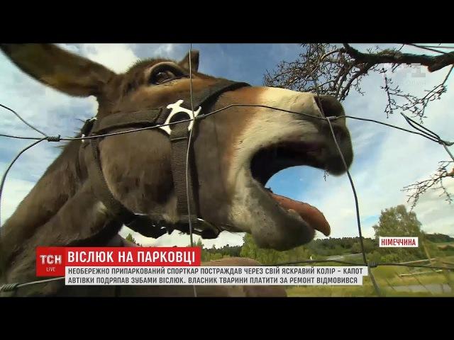 Віслюк проти Макларена: власник спорткара подав у суд за спаплюжений капот