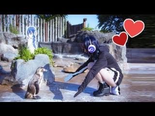 В Японии одинокий пингвин полюбил аниме девушку