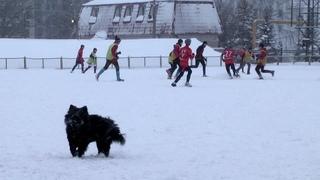 Открытый зимний турнир на снегу ФСЦ «Чайка» I тур «Метеор» — «СДЮСШОР-9/2» 0:5 ()
