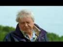 BBC Жизнь млекопитающих 06 Преимущества Познавательный природа 2002