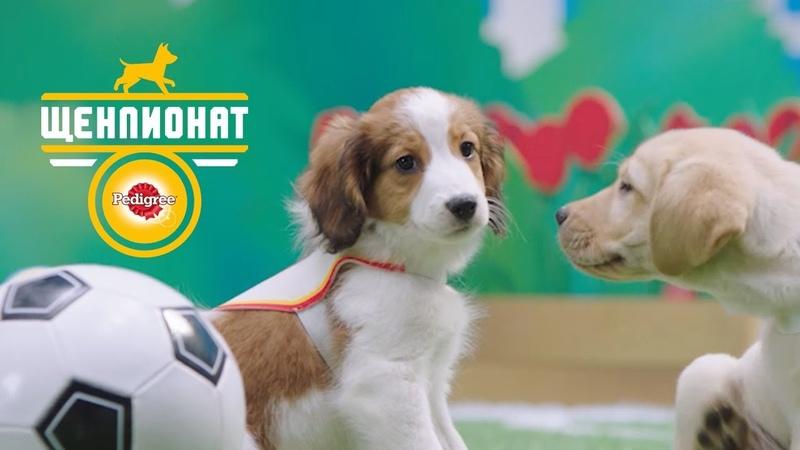 PEDIGREE® Щенпионат Спорт для настоящих щенков